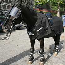 Horse: Riot Protection