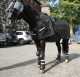C.P.E - Horse Full Body - High Impact  Protection Riot Use